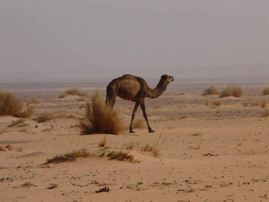 Libyeni_0209 173