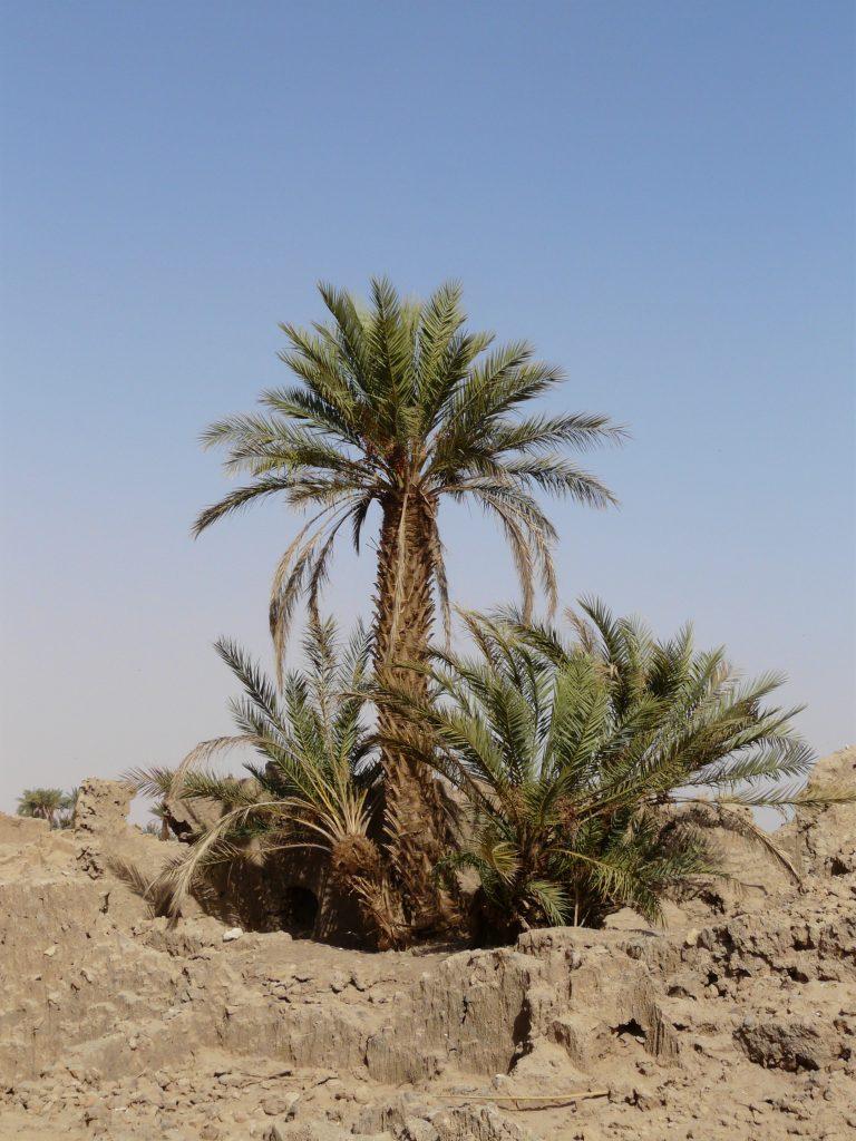 Libyeni_0209 257